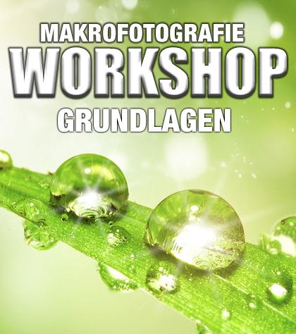 WS-Makrofotografie